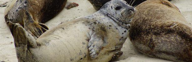 Onze Toekomst…..(Bossen en zeehonden verdwijnen….En wij!?)